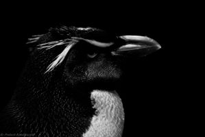 Mr. Pinguin by sneakjoint