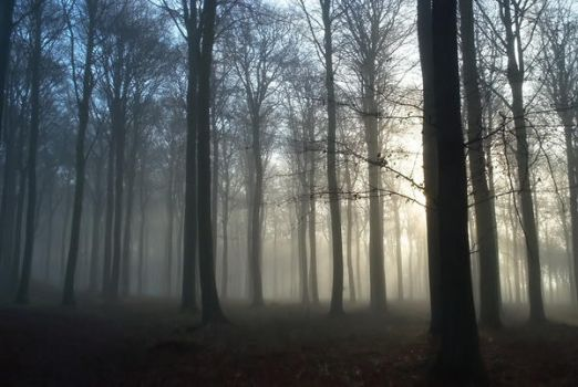 STOCK Foggy forest by nomuh
