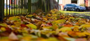 Autumn Leaves 2 by BusterBrownBB