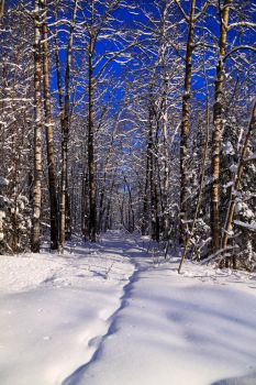 Winter Path by Velp