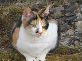 Calico Cat by craftywench-nh