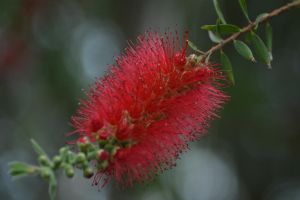 BottleBrush by TexasPanda