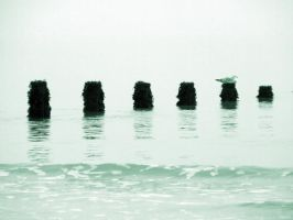 posts in the water by N-eXu-S