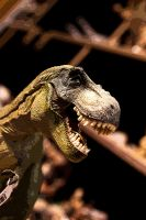 Berlin Museum: T-Rex for sale! by Roydz
