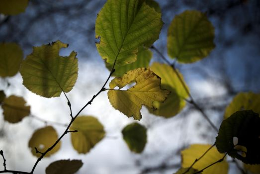 Autumn Leaves by Sonnich