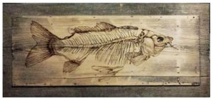 FISH  X-ray by bsmyka