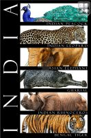 Animals of India by rogerdhall