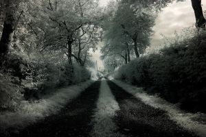 The Path by coulombic