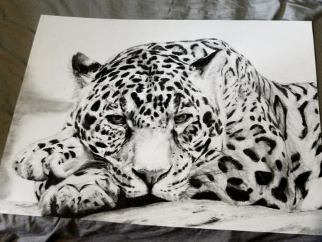 Leopard by ThugF0rLife