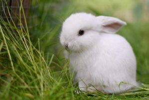 Lucaniss the Mini lop by Exempeel