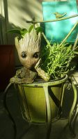 Baby groot planter by chickiedee