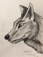 Wolf  portrait  by GentlestGiant