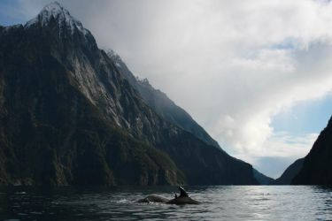 Dolphins - Milford Sound 3 by kimbui