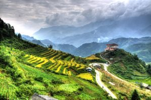 rice fields by haimohayon