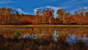 Autumn Foliage Scene At Cash Lake by Matthew-Beziat