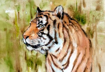 Malayan Tiger 2 by young920