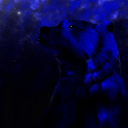 Bear Gaze on Space by shunter071