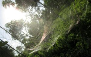 Cobweb by ThisIsTwistedMinds