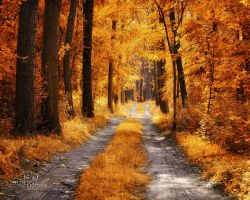 The golden path by markborbely
