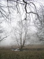 trees on a foggy morning by JSaurer
