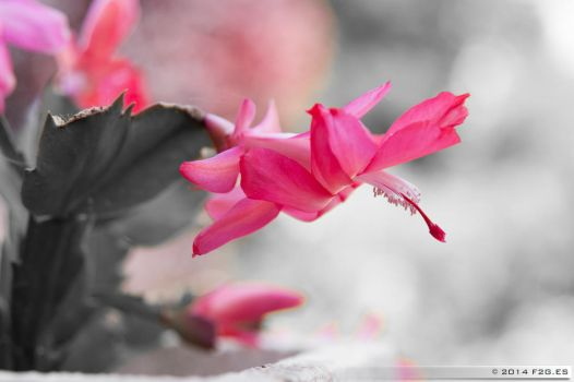 Pink red in grey plant by F2GBcn