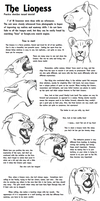 Educational Art Tutorial: The Lioness by CarmanMM-Dirda