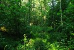Spring forest 16 by MASYON