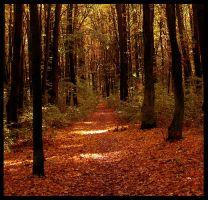 forest road in autumn by Tanitha