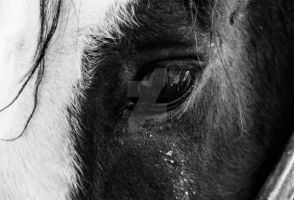 Horse in Arequipa by CassKing