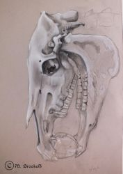 Horse Skull and Apple by she1badelf