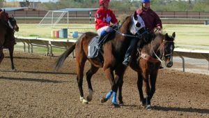 Racehorse Stock 52 by Rejects-Stock