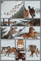 /Horse Age/ Page 22 by BUGHS-22
