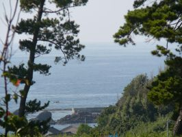 Sea Through Mountain Pines by katters
