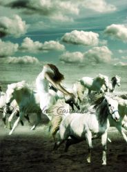 white horses by PITIKMIKMIK