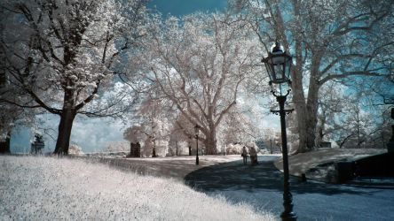 A Walk In The Park infrared by MichiLauke