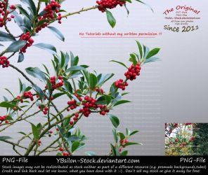 Branches with red berries by YBsilon-Stock by YBsilon-Stock