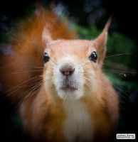 Squirrel all up in your vignette by jaffa-tamarin