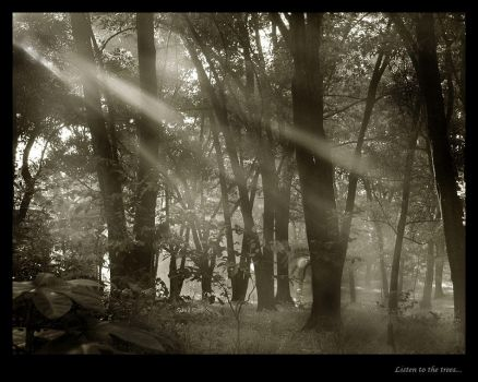 Listen to the trees by DonovanDennis