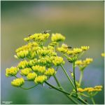 Natures Revival 075 by Frank-Beer