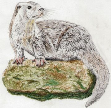 Otter by Rivdel