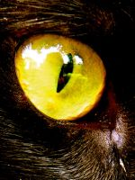 Cats eye 3 by Beccadinasour