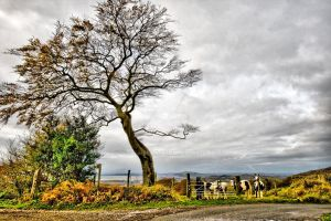 Upland Ponies and Tree by welshbeck