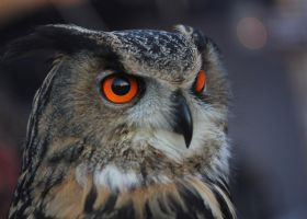 these bright eyes by DieCooleSocke