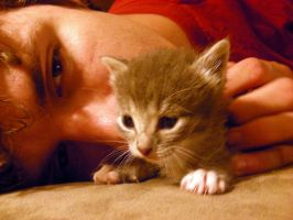 Boyfriend and kitten 2 by cheesepossum