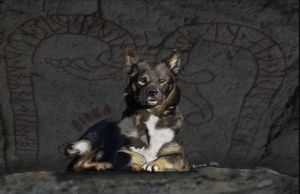 Birka, Lapsk vallhund (hearding dog) by BasseBlues