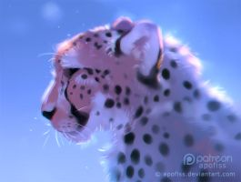 frosty cheetah by Apofiss