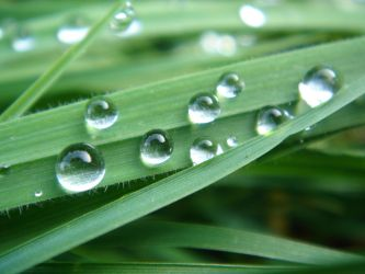 water drops 1 by sacral-stock