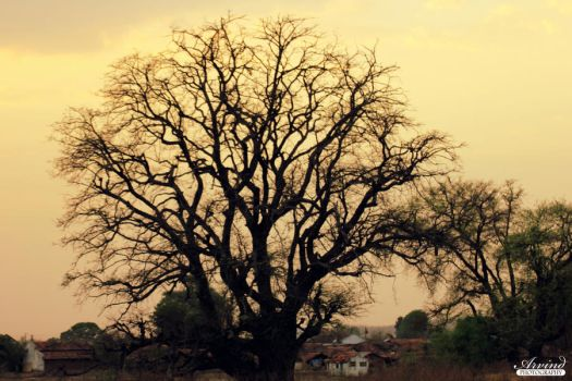 Branched Out by Arvind-R