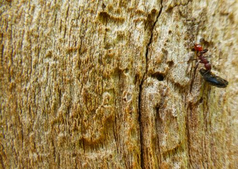 Untitled Ant by jeuxsansfrontieres