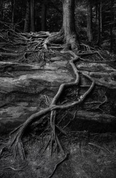 Even On The Stones The Trees Grow by Andruhastepanov